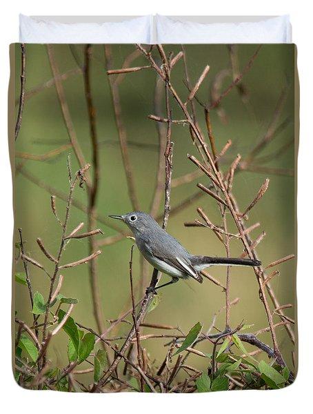 Duvet Cover featuring the photograph Blue-gray Gnatcatcher by John Black