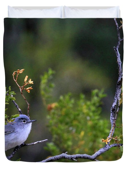 Blue-gray Gnatcatcher  Duvet Cover
