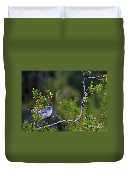 Blue-gray Gnatcatcher  Duvet Cover