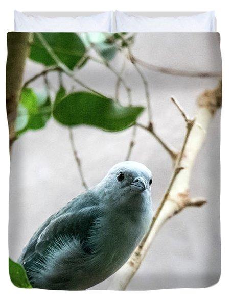 Blue-grey Tanager 2 Duvet Cover
