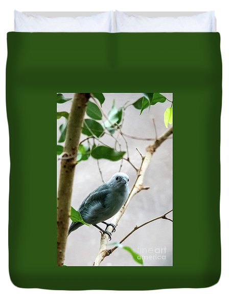 Blue-grey Tanager 2 Duvet Cover