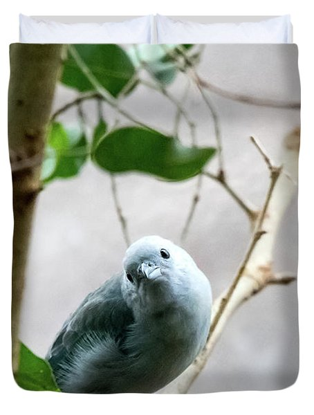 Blue-grey Tanager Duvet Cover
