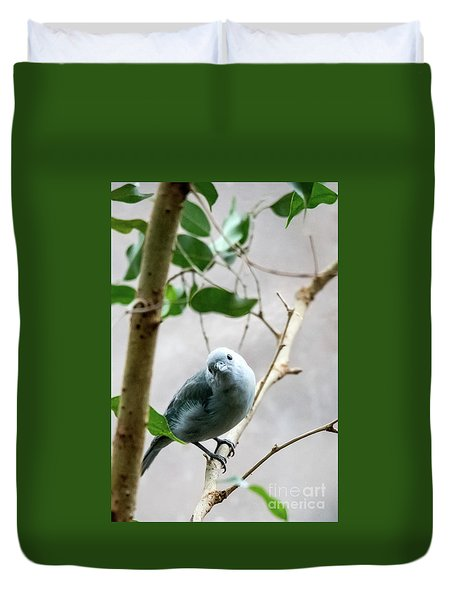 Blue-grey Tanager Duvet Cover