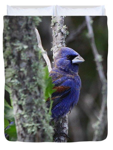 Blue Grosbeak In A Mangrove Duvet Cover