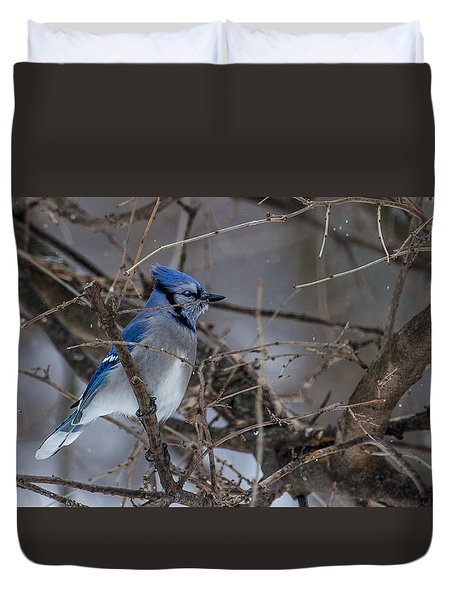 Duvet Cover featuring the photograph Blue Jay by Dan Traun