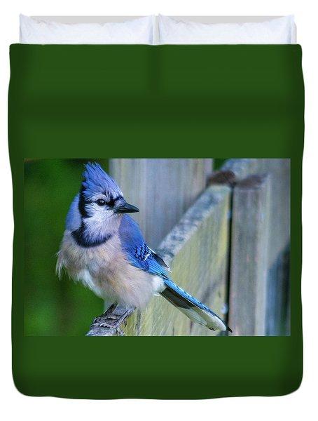 Blue Jay Fluffed Duvet Cover