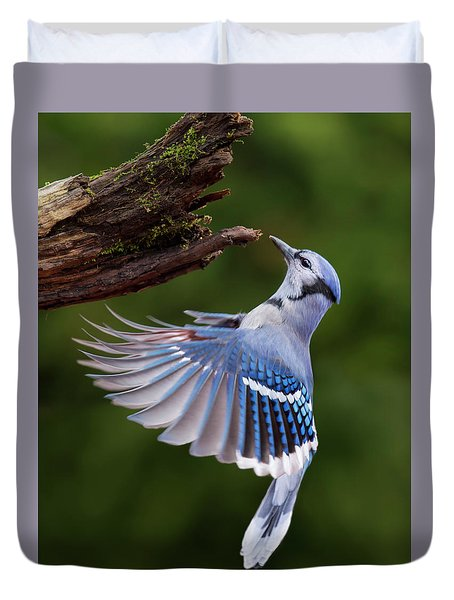 Duvet Cover featuring the photograph Blue Jay In Flight by Mircea Costina Photography