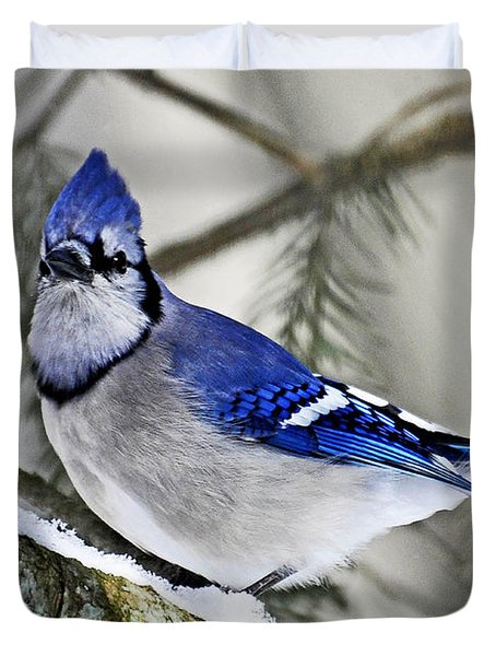 Blue Jay In Winter Duvet Cover by Rodney Campbell