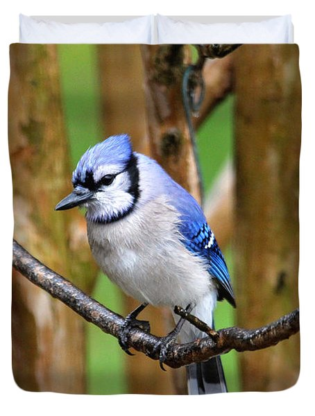 Blue Jay On A Branch Duvet Cover