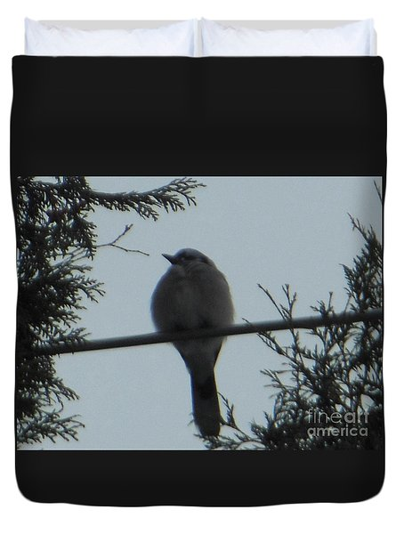 Blue Jay On Wire Duvet Cover