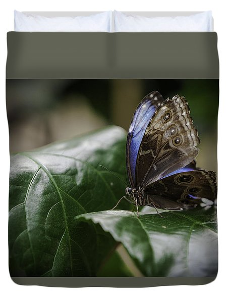 Duvet Cover featuring the photograph Blue Morpho On A Leaf by Jason Moynihan
