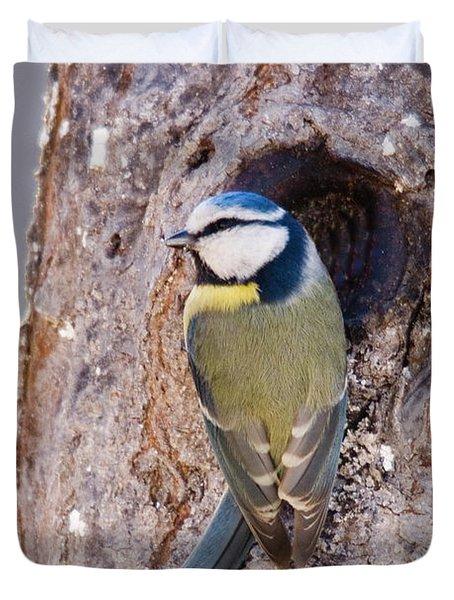 Blue Tit Leaving Nest Duvet Cover by Cliff Norton