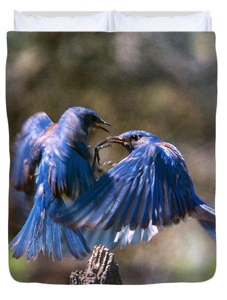 Bluebird Battle Photograph by Mike Dawson