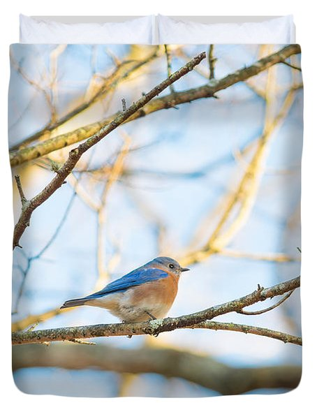 Bluebird In Tree Duvet Cover