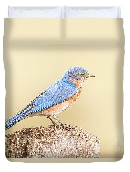 Bluebird On Fence Post Duvet Cover by Robert Frederick