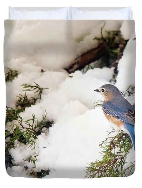 Duvet Cover featuring the photograph Bluebird On Snow-laden Cedar by Robert Frederick