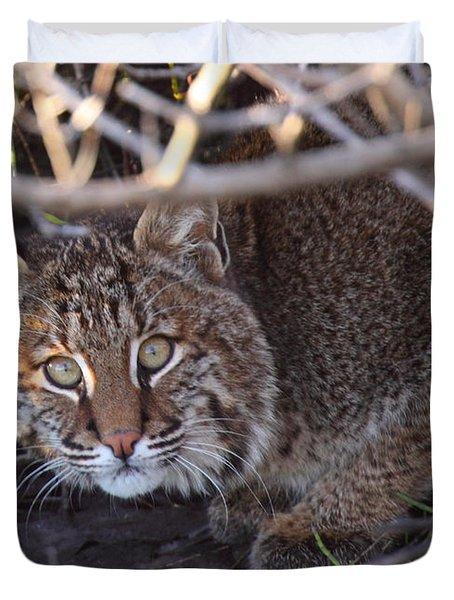 Bobcat Duvet Cover by Bruce J Robinson