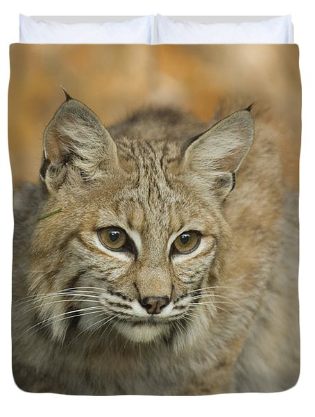 Bobcat Felis Rufus Duvet Cover by Grambo Photography and Design Inc.