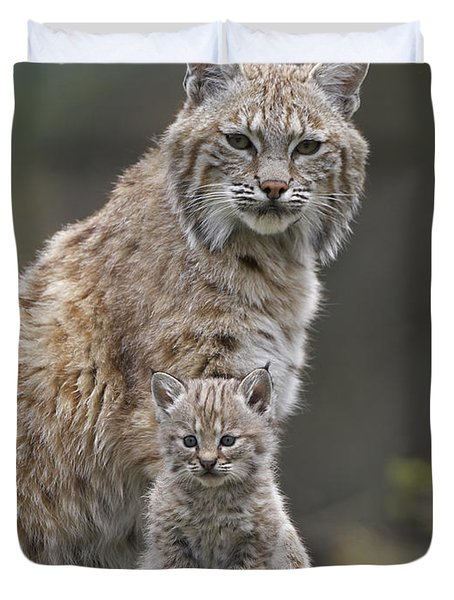 Bobcat Mother And Kitten North America Duvet Cover by Tim Fitzharris