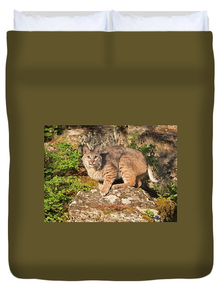 Bobcat On Rock With Tongue Out Duvet Cover