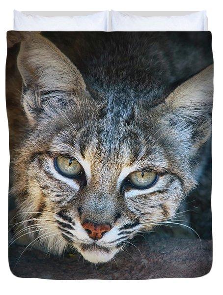 Bobcat Stare Duvet Cover