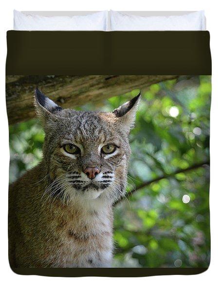 Bobcat Staring Contest Duvet Cover