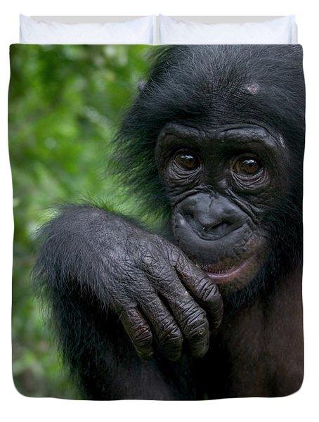 Bonobo Pan Paniscus Juvenile Orphan Duvet Cover