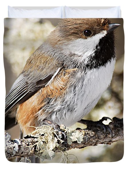 Boreal Chickadee Duvet Cover by Larry Ricker