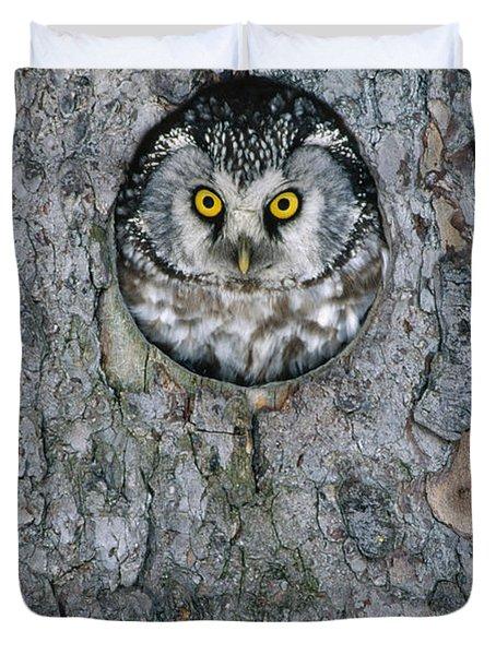 Boreal Owl Aegolius Funereus Peaking Duvet Cover by Konrad Wothe