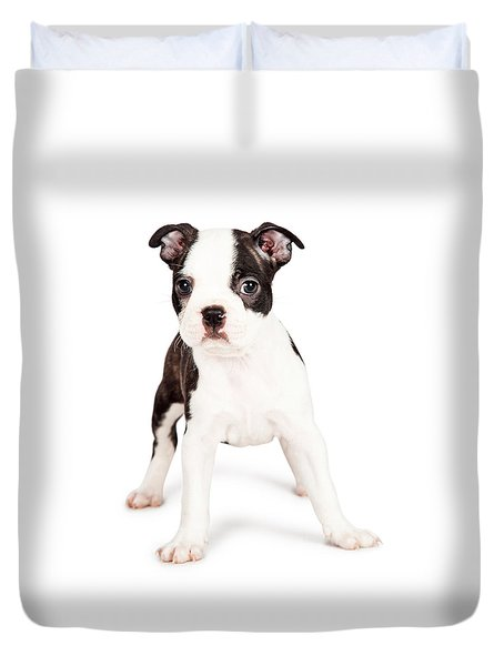 Boston Terrier Puppy Looking At The Camera Duvet Cover