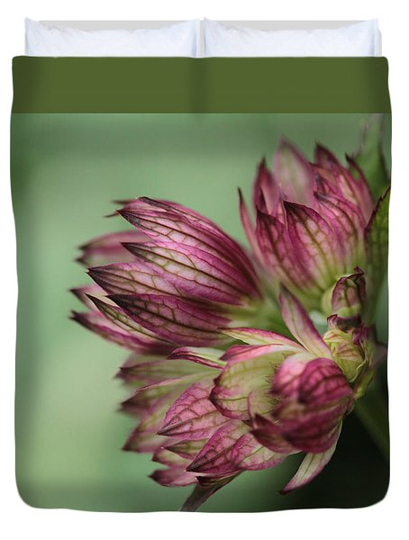 Botanica .. New Beginnings  Duvet Cover by Connie Handscomb