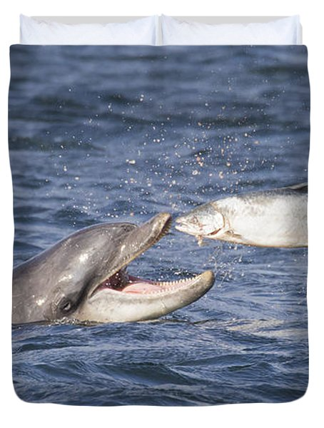 Bottlenose Dolphin Eating Salmon - Scotland  #36 Duvet Cover