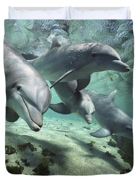 Four Bottlenose Dolphins Hawaii Duvet Cover