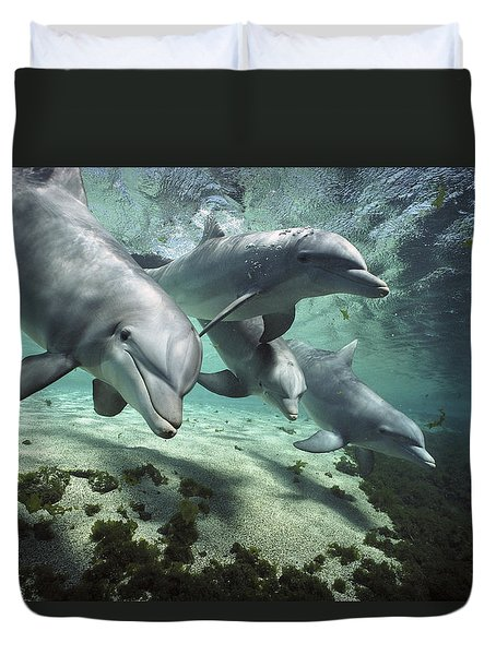 Duvet Cover featuring the photograph Four Bottlenose Dolphins Hawaii by Flip Nicklin
