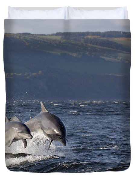 Bottlenose Dolphins Leaping - Scotland  #37 Duvet Cover