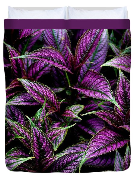 Bouquet Of Persian Shield Duvet Cover