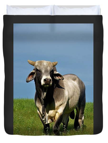 Duvet Cover featuring the photograph Brahman Boss by Jan Amiss Photography