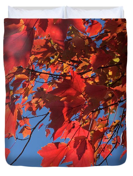 Branches Of Red Maple Leaves On Clear Sky Background Duvet Cover