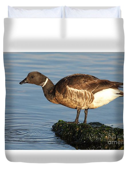 Brant Leaning Over Water Duvet Cover