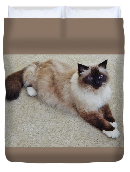 Brassy Our Birman Duvet Cover by VLee Watson