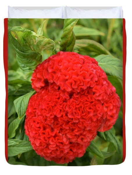 Bright Red Cockscomb Duvet Cover