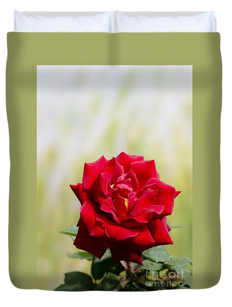 Bright Red Rose Duvet Cover