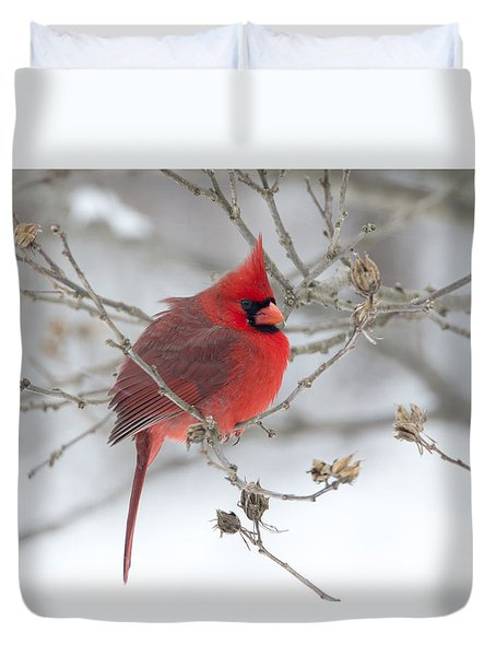 Duvet Cover featuring the photograph Bright Splash Of Red On A Snowy Day by Skip Tribby