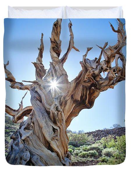 Bristlecone And Sun Duvet Cover