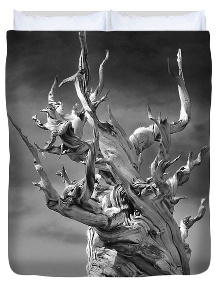 Bristlecone Pine - A Survival Expert Duvet Cover by Christine Till