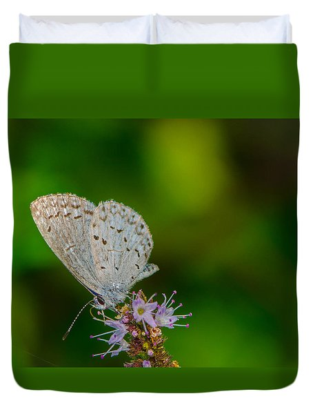 British Butterfly Or Little Blue Duvet Cover