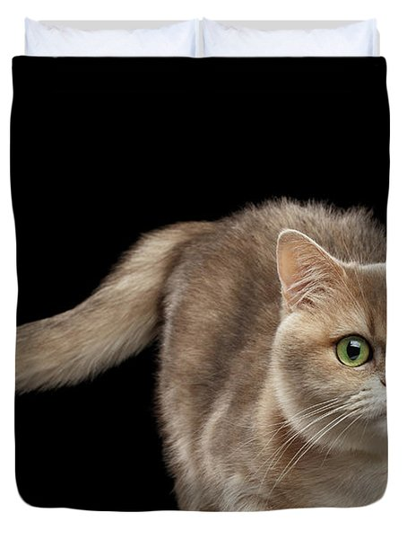 Brittish Cat With Curve Tail On Black Duvet Cover