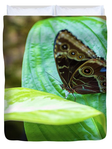 Brown And Blue Butterfly Duvet Cover