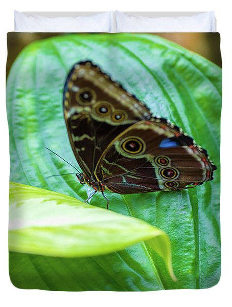 Duvet Cover featuring the photograph Brown And Blue Butterfly by Raphael Lopez