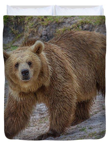 Brown Bear 3 Duvet Cover